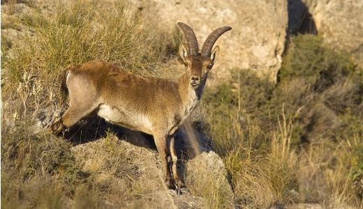 Animals that have recently gone extinct