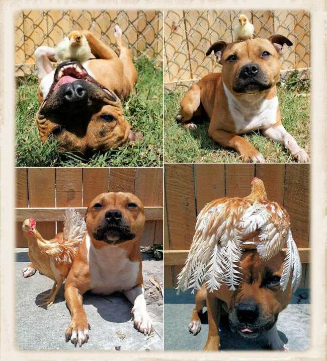 Image of: Animal Friendships Love Your Pet Share Abc News Most Unlikely Animal Friendships Caught On Camera Love Your Pet