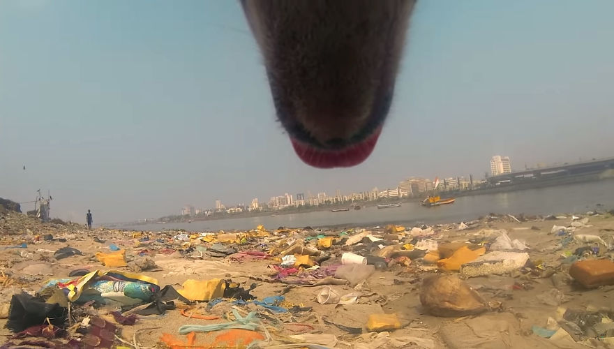 A Video of the Cruel Life of a Stray Dog in India filmed with a Go Pro on the stray dog