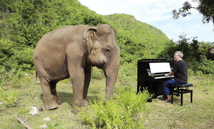 Blind Elephant Starts Dancing After The Pianist Plays Piano For Comforting Her