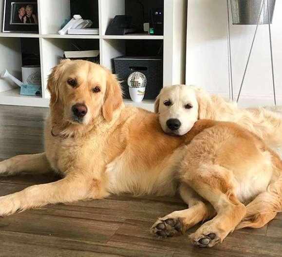 Dog Mom Helps Doggo Daughter Move The Giant Stick