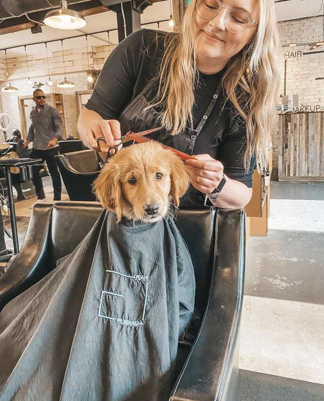 Puppy Visits The Salon And Gets A Hair Treatment With His Mom