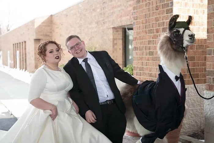 Guy Comes With A Dressed-Up Llama At His Sister's Wedding Just Like He Promised Her 5 Years Ago