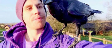 Meet Loki, The Raven Who Loves Companionship and Cuddles